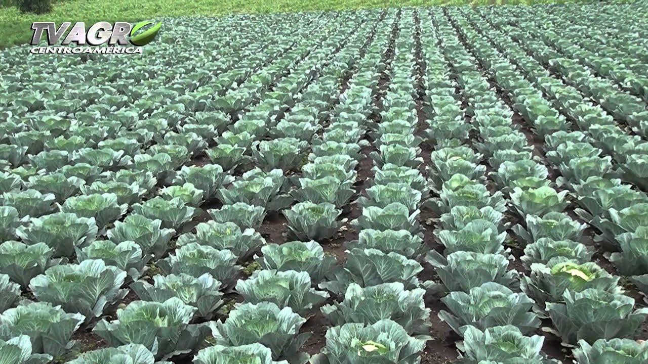 Entrevista ministro de agricultura de guatemala youtube for Ministerio produccion