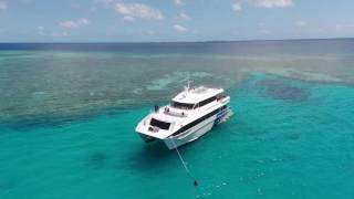 Lady musgrave experience, Scuba, Snorkelling and island tour of the barrier reef