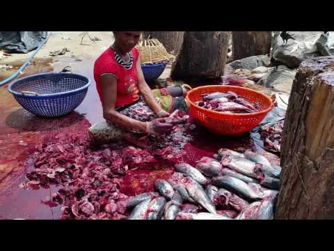 Fishing Industry - Negombo, Sri Lanka (Part 5 Of 7)