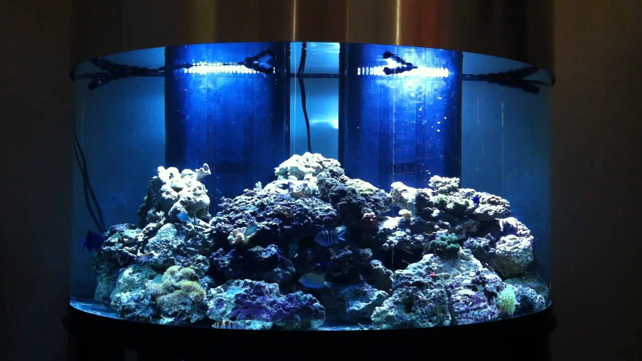 144 gallon oceanic half circle saltwater reef aquarium