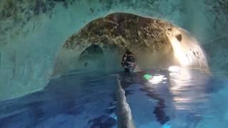 15 min underwater AirPockets Tour Vortex Springs