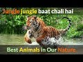 Jungle jungle baat chali hai pata chala hai | Nature animals