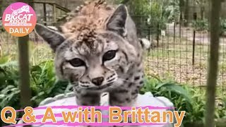 Q&A at Big Cat Rescue- Follow along as Keeper Brittany shows you many of the Lions, Tigers, Leopard