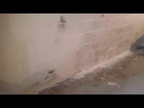 Black mold removal basement foundation wall Walkersville MD