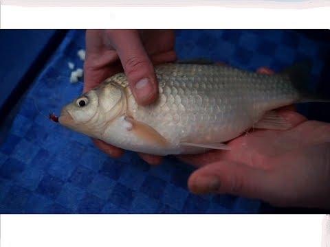 Рыбалка- Супер уловистая приманка  МАЛИНКА С ЯЙЦОМ!!!