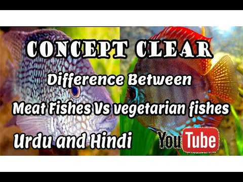 Concept Clear   Difference Between   (Meat Fishes Vs Vegetarian Fishes !!! Urdu And Hindi