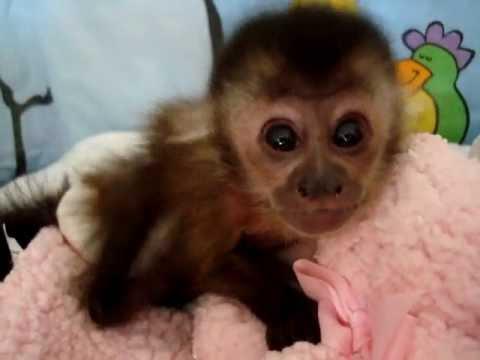 Baby Monkey Cam Youtube