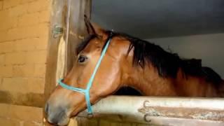 ускакала в поле молодая лошадь(, 2013-02-26T18:11:26.000Z)