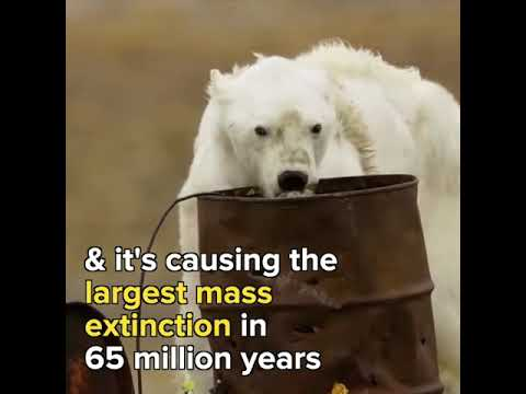 Our planet is burning, killing millions of animals
