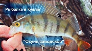 """Рыбалка в Кушве  - """"Окунь заводской"""""""