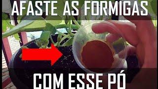 Elimine as Formigas das Plantas Usando Apenas Esse Pó