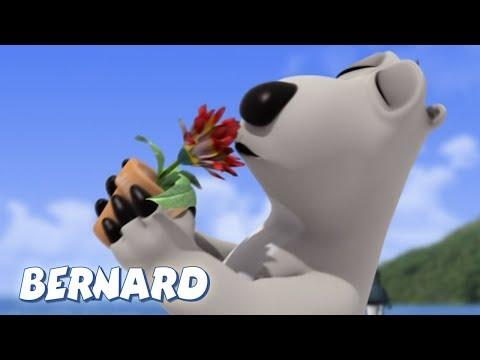 Bernard Bear | The Flower AND MORE | 30 Min Compilation | Cartoons For Children