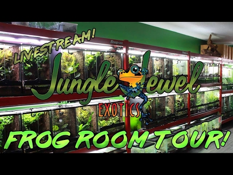 Jungle jewel exotics!! Dart frog time!