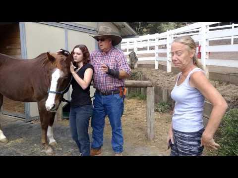 video:Rescue Horse