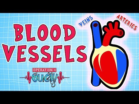 Operation Ouch - Blood Vessels   Science for Kids