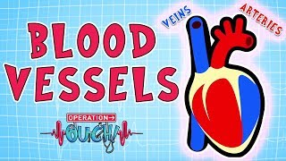 Operation Ouch - Blood Vessels | Science for Kids