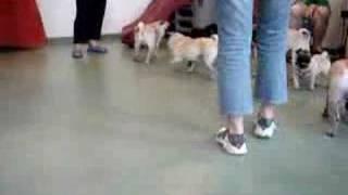 Pug Meetup #4