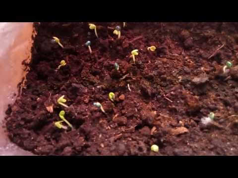 Проект планировки сада -