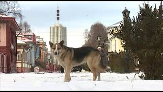 В Архангельске появился местный Хатико