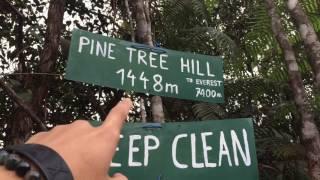 Pine Tree Hill Vlog