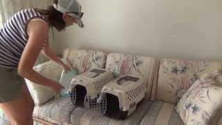 #129 США Гавайи Гонолулу Фильм ужасов - Кошки переезжают к ребятам-белорусам