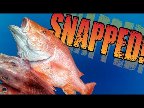 Hunt For Red Snapper | A Texas Deep Sea Fishing Adventure!