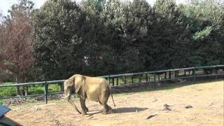 Olmense Zoo met VV Auto