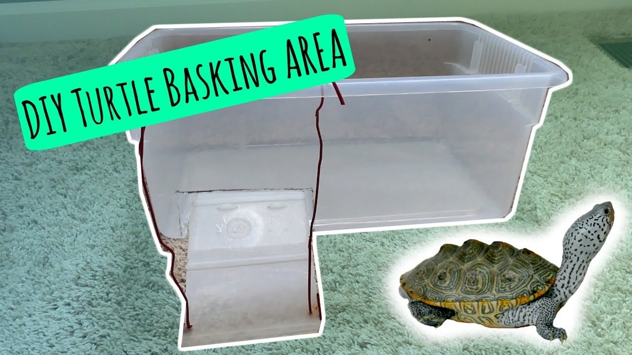 Turtle Basking Area Diy Cheap And Easy