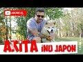 Köpek Irkları - Japon Akita İnu