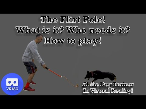 The Flirt Pole! What Is It? Who Needs it?  How to play.  In Virtual Reality!