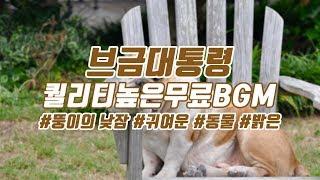 [브금대통령] (귀여운/동물/Animal) 뚱이의 낮잠…