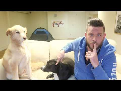 Rescue Dog Review