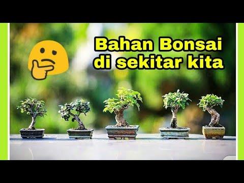 5 Bonsai Dari Pohon Liar Di Sekitar Rumah, Apa Saja ?