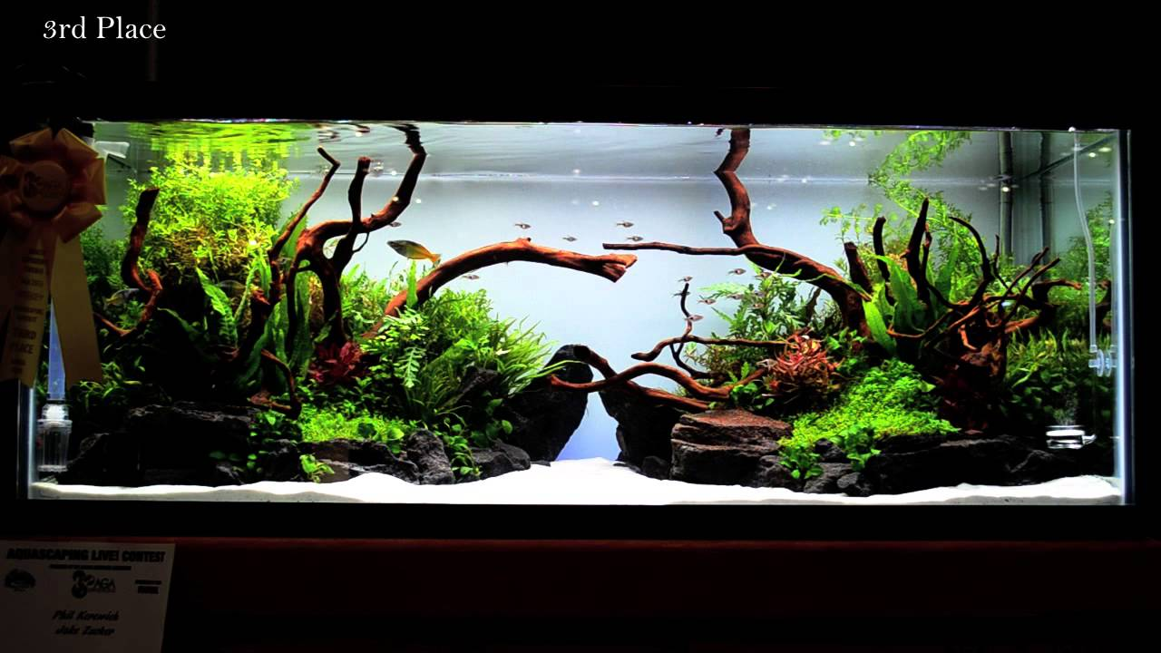 2015 Aquatic Experience Aquascaping Competition - YouTube