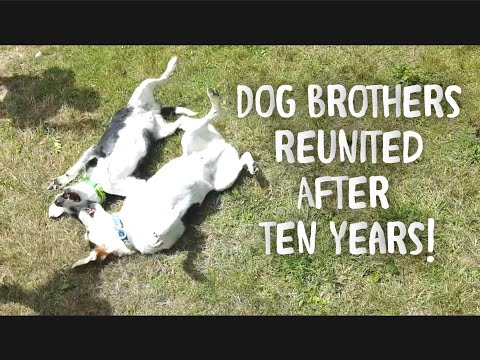 Dog Reunites With His Long-lost Brother After Ten Years!!!