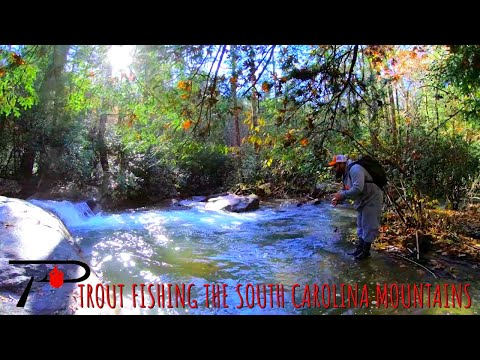 Trout Fishing The South Carolina Mountains