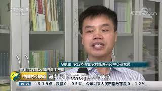 [中国财经报道]草地贪夜蛾入侵粮食主产区 虫害扩散速度有所放缓 防控形势依然严峻| CCTV财经