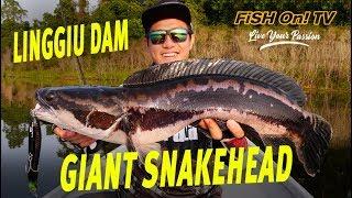 Giant Snakehead fishing in Linggiu Dam