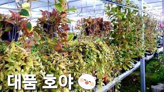 남사 화훼단지 예삐플라워아울렛 이름과가격 공기정화식물 …
