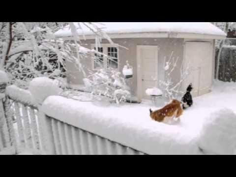 Dogs Enjoy Snow Storm In Boston Area