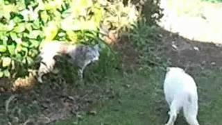 Cat fight cat war.
