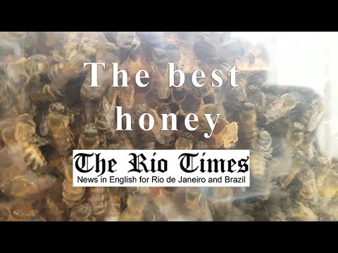 Rio Times - The best honey