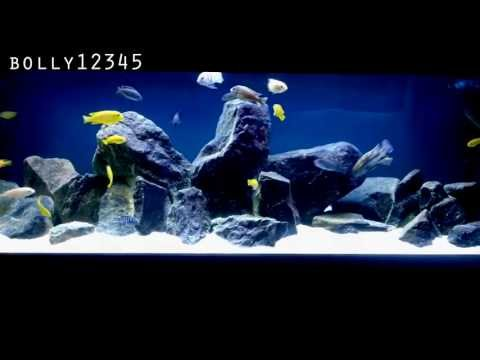 International Fish Tanks Ep 1