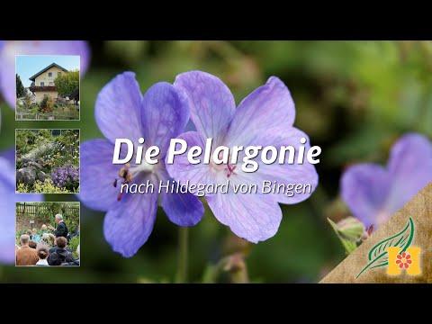 Die Pelargonie bei Hildegard von Bingen