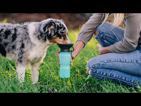 Highwave | AutoDogMug® Dog Bowl Water Bottle