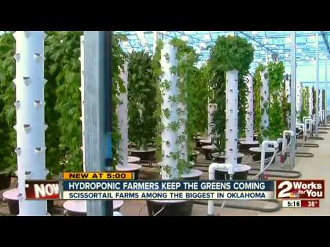 """The world's largest aeroponic farm, exploding with food in the middle of a """"food desert"""""""