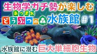東大・生物学ガチ勢による『あつ森水族館』の楽しみ方 #1 サンゴ水槽だけで5動画くらいになりそう