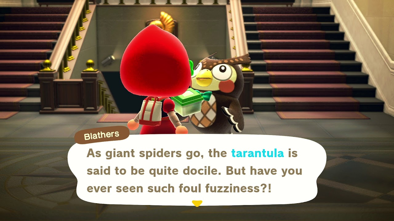 What Happens When You Donate A Tarantula To Blathers Animal