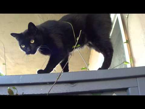 CAT ESCAPES DEATH