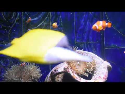 Finding Nemo | The Lost Chambers Aquarium in Dubai